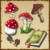 Set of poisonous mushrooms and cookbook Royalty Free Stock Images
