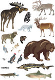 Set of polar animals Stock Image