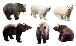Set of polar and brown bears Stock Photos