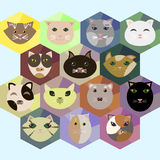 Set of polygon flat style icons with different cats Stock Photography