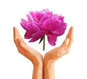 Set Polygonal peony flower on Cupped hands Royalty Free Stock Image