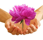 Set Polygonal peony flower on Cupped hands Royalty Free Stock Images