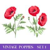 Set of poppy flowers elements. Stock Photos