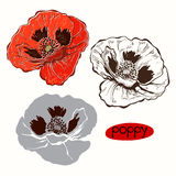 Set of poppy  isolated on white background. Hand drawn  il Stock Photo