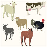 Set of popular colorful animalector. Flat style. Vector illustration Stock Photography