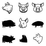 Set of Pork labels. Pig silhouettes and heads. Design elements  Royalty Free Stock Image