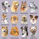 Set of portraits of dog breeds royalty free illustration