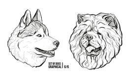 Set of dogs. Breeds Husky and Chow Chow. Graphical vector illustration Royalty Free Stock Images
