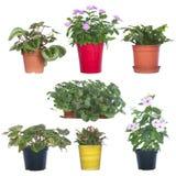 Set pot plants isolated on white Royalty Free Stock Photo
