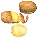 Set of potatoes peeled, in peel, whole isolated, watercolor illustration Stock Photos