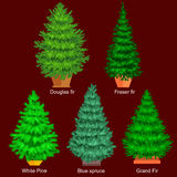 Set of potted christmas vector tree like fir or pine Blue spruce for New year celebration without holiday decoration Stock Photos