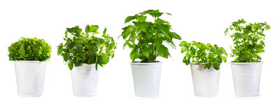 Set of potted green plants. Isolated on white background Stock Images