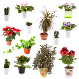 Set of potted plants. On a white background Stock Image