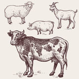 Set poultry - cow, sheep, pig, goat. Farm animals. Vector illustration�set poultry - cow, sheep, pig, goat. A series of farm animals. Graphics drawing. Vintage Stock Photo