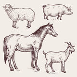 Set poultry - horse, sheep, pig, goat. Farm animals. Vector illustration. Set poultry - horse, sheep, pig, goat. A series of farm animals. Graphics drawing Stock Photos