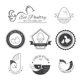 Set of poultry logos. Set of vector logos and signs for Vintage emblems for chicken store and eco farm Stock Image
