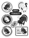 Set of premium turkey meat labels and stamps. Vector Stock Images