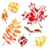 Set of printed leaves. Art illustration of autumn foliage Royalty Free Illustration