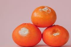 Set przegniłe pleśniowe pomarańcze, tangerines na różowym tle Fotografia narastająca foremka Karmowy kontaminowanie, zły psujący fotografia stock