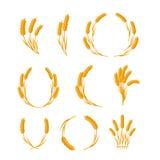 Set Pszenicznych ucho Wektorowi pojęcia w Płaskim projekcie Zdjęcie Royalty Free
