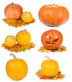 Set with pumpkins Stock Photo
