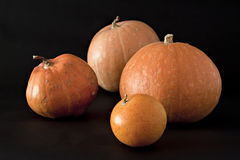 Set of pumpkins. Royalty Free Stock Photos