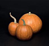 Set of pumpkins. Royalty Free Stock Photography
