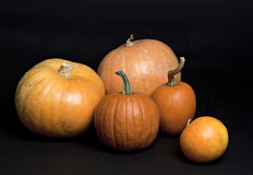 Set of pumpkins. Stock Image