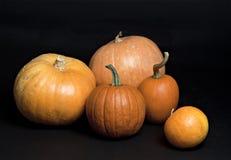 Set of pumpkins. Stock Image
