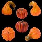 Set of pumpkins, Halloween Royalty Free Stock Image