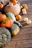 Set of pumpkins Stock Photography