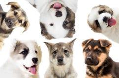 Set of puppies Stock Photo