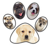 Set of puppies, paw Royalty Free Stock Photos