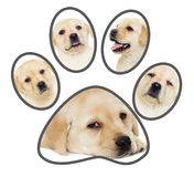 Set of puppies, paw Royalty Free Stock Photo