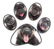 Set of puppies, paw Royalty Free Stock Images