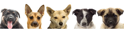 Set puppies peeking Stock Images