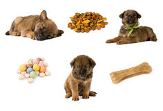 Set of puppy Stock Photo