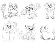 Set puppy dogs contour line. The set cute puppy dogs of a Border Collie, Cocker Spaniel, Akita Inu, Welsh Corgi and Scottish Terrier breeds. A black contour line Royalty Free Stock Images