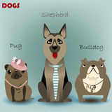 Set with purebred dogs Royalty Free Stock Image