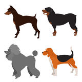 Set of purebred dogs Stock Photography