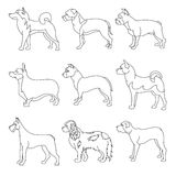 Set of purebred dogs in linear style Royalty Free Stock Images