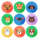 Set of Pedigreed Dogs on Colored Circle Icons Stock Photography
