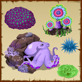 Set of purple octopus and underwater vegetation Royalty Free Stock Photos