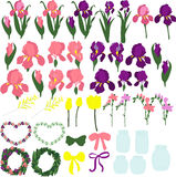 Set of purple and pink irises, the individual parts of the flowers, the buds of irises, leaves of irises, flowers of irises, Stock Photography