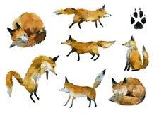 Set puszyści lisy w różnorodnych pozach ilustracji