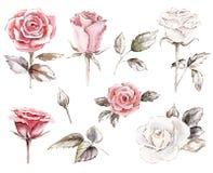 set róż cliparts ilustracja wektor