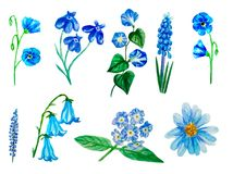 Set różna akwarela kwitnie, lobelia, ranek chwała, lupine, muscari, heliotrop, lna błękit, aster, kampanula ilustracja wektor