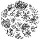 Set różna wiosna kwitnie i rośliny rysować ręką Obrazy Stock