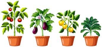 Set różne rośliny Zdjęcia Stock