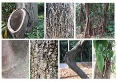 Set różni drzewo bagażniki Bagażnika ustalony inkasowy drzewo na Obraz Stock